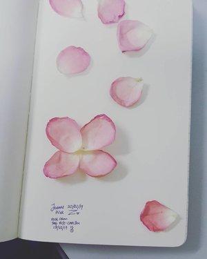 玫瑰 玫瑰  最娇美 玫瑰 玫瑰 最艳丽 🌹J : I love rose 🌹  #Clozette #clozettebloggerbabes #bloggerbabes #starclozetter #blogger #bloggermalaysia #asianblogger  #lifestyle #lifestyleblogger #bloggerkl #bloggerselangor #influencer #socialmedia #like4like #date #rose #roses #rosecollage #collage