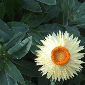 Shine bright. Shine light #flowers #flower dome #gardensbythebay #singapore #clozette #floral