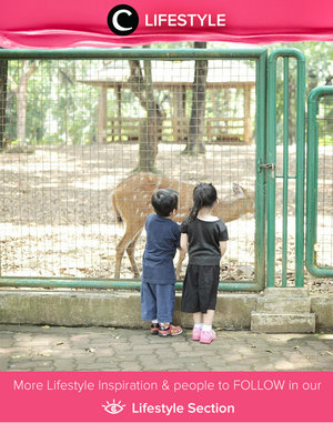 Visiting zoo and introducing the animals to kiddos. Simak Lifestyle Updates ala clozetters lainnya hari ini di Lifestyle Section. Image shared by Clozette Ambassador @diarykania. Yuk, share momen favorit kamu bersama Clozette.