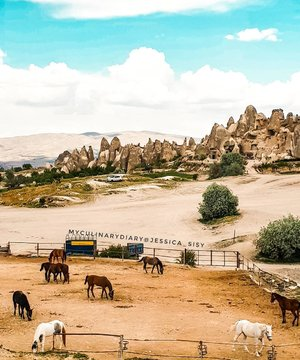 Horses on the field!  Captured by Samsung S9 only. Love the tone colour of this camera! . Hop over to myculinarydiarycom.wordpress.com/TRAVEL to see my experience in abroad. #sisytravelingdiary #goreme #horse #samsungs9 #samsungonly . . . . . . #clozetteid #wisata #travel #igtravel #travelgram #buzzfeed #photography #holiday #turkey #turkiye #cappadocia #kapadokya #desert #dubai #photography #photooftheday #foodoftheday #cakedecorating #photoshoot #fujifilm