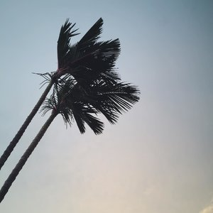 The palms!...Aesthetic the f!Bandung, 10 February 2018.#palmtrees #coconut #palm #coconuttrees #sky #colourgradation #shillouette #nature #mothernature #aesthetic #tumblr #skyscraper #iphonegraphy #godisgood #🌴#ggrep #couplegoals #clozette #clozetteid