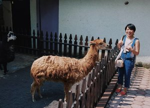 Alpaca is my favorite!!!••••••••••#clozetteid #dearestviewfinder #beautifulmatters #ootdindo #darlingdaily #instastyle #stylista #justgoshoot #outfitinspo #outfitoftheday #whatiwore #darlingescapes #mommyhood #vsco #myunicornlife #momstyle #mommyblogger #momfashion #theheartcaptured #finditliveit #thehappynow #todayimwearing #fashionpost #styleoftheday #wheretofindme #hypebeast #ファッション #스타일 #コーデ #littlestoriesofmylife