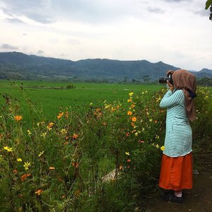 Capturing these hidden 'gems' in town (beautiful paddy fields and the hills behind) ✨🌾🌾🌾🌼🌸..#beautifulplace #thatsdarling #paddyfields #whataview #livefolk #ootd #outfit #fblogger #stripes #orangeskirt #clozetteid #ifbootd #abmstyle #abmlifeiscolorful #flowers #explorejogja #visitindonesia