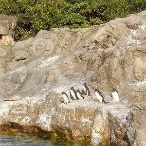 Squad goal 😂🐧 #penguin #tokyosealifepark #clozetteid #tokyo