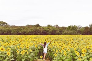 Wherever you go, always bring your own sunshine ☀️️🌻 Taking a pic with the never ending sunflower fields ✅Checked off #chloewlbucketlist 😉✌🏻️•••••#chloewlootd #chloewltravels #khaoyaitrip #khaoyai #clozette #clozettedaily #jimthompsonfarm #sunflowers #sunflowerfields #bucketlist #thailand