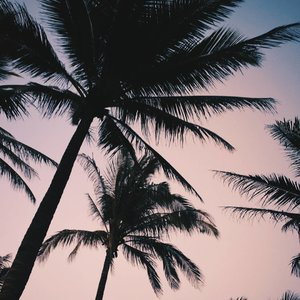 Find me under the palm trees . #vsco #sunset #travel #summer #instadaily #wanderlust #clozette #vscocam #vscophile #beach #island #life #philippines #igers #photography #travelph #trees #photooftheday #pink #love #wallpaper #summervibes  #tropical #nature #instagood #blogger #bloggerph #lfl #fff