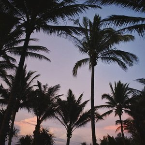 Find me under the palms . #vsco #travel #summer #sunset #vscocam #vscophile #travelph #boracay #wanderlust #spring #palmtrees #philippines #igers #photography #instadaily #l4l #clozette #scenery #nikon #photooftheday #tumblr #pink #pinksky #travelphotography #wander #explore #discover #tropical #paradise #nature