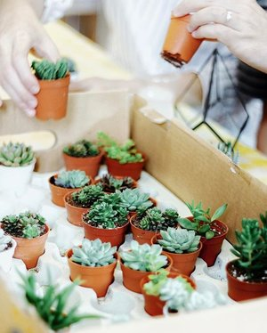S U C C U L E N T S 🌿 | Still can't get over how cute these little plant are. 😍 . . . . #clozette #sharingiscaring #terrarium #workshop #mothersday #igers #igsg