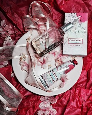 C E R I S I E R P A S T E L 🌸 | @loccitane packs the best media kits (love you @cheriexsh! 💕) In celebration of the 10th anniversary of the Fleurs de Cerisier fragrance, the Cerisier Pastel Eau De Toilette (limited edition!) is now available online and in stores. If you're a fan of soft floral fragrances, check this one out! Too lovely 💕....#clozette #igers #igsg #loccitane #scents #perfume #sharingiscaring
