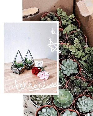 T E R R A R I U M 🌿 | Surprised my mum w spots for us at @craftsforgreen's Teardrop Terrarium workshop earlier today as a Mother's Day treat and boy, was it fun! You don't usually see other workshops provide this type of casing ☝🏻 I absolutely loved how the session was an intimate gathering of seven ppl, allowing us to all have one-on-one interactions w the instructor 👍🏻 If you're interested, drop them a DM! Totally worth it ✨ . . . . #mothersday #workshop #terrarium #clozette #gardening #igers #igsg #sharingiscaring