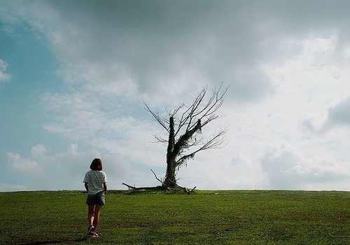 """<div class=""""photoCaption""""><Do not judge my story by the chapter you walked in on.> 🐾🐾 This lone Singapore tree has once seen its fame as the instagrammable tree.  Write up on blog under """"Singapore"""". . . . . #singapore #visitsingapore #exploresingapore #clozette</div>"""