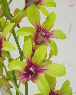 Love is the flower you've got to let growHappy Weekend 😍......#anggrek #orchids #anggrekdendrobium #bunga #minigarden #tanaman #nature #igersasia #travelerblogger #ritystory #travelerlife #travelgram #womanblogger #igersindonesia #gallery_of_all #belajarmenanam #girlexplorer #clozetteid #mygallery #samsumgid #homegarden #urbangarden #instagarden #womenwhoexplore #rityminigarden #berkebun #flower #plantsofinstagram #plantlife