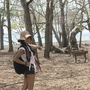 #pesonaIndonesia #saptanusantara Gisele my belle🎶 Look at my deer~😍 This is the end of Komodo's tracking! 💪 My goodness the view's so instagramable 😍😍😍 Komodo National Park is located in the center of the Indonesian archipelago, between the islands of Sumbawa and Flores.  The purpose was to conserve the unique Komodo dragon (Varanus komodoensis) and its habitat, and protect its entire biodiversity, both terrestrial and marine.  In 1986, the Park was declared a World Heritage Site and a Man and Biosphere Reserve by UNESCO, both indications of the Park's biological importance. #deer #komodo #island #Indonesia #komodonationalpark #Park #tracking #heritage #wonderfulIndonesia #traveling #travel #traveler #tourism #trees #summer #lifestyle #outdoor #ootd #ootdindo #ootdmagazine #ootdshare #shortjeans #hat #tshirt #travelinstyle #clozetteambassador #clozetteID @clozetteID