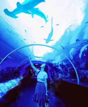 Part of your world 🧜🏻♀️ Not underwater but more like under water, getting overwhelmed By this giant shark🦈@rwsentosa Good Morning 🙆🏻♀️ #AbellinSG #singapore #clozetteid #cotd