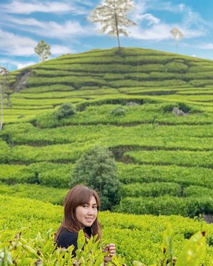 It's weird when you think that you are weird and it's weird when you don't know that you are weird..But because being normal isn't working anyway. So?......#weird #thoughts #witty #normal #travel #travelgram #instatravel #nature #teagarden #plantation #tealeaf #ciwidey #bandung #blogger #travelblogger #shotoniphone #vsco #ootd #clozetteid