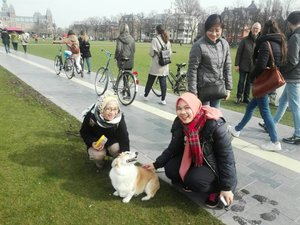 One fine day in Amsterdam when a Corgi found you so fascinating.#amsterdam #rijksmuseum #wheninnetherlands🇳🇱 #ClozetteID #throwback